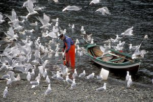Fisker, måser og båt i fjæra.