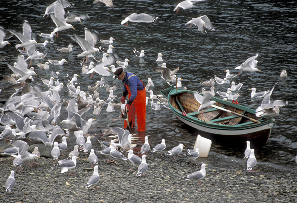 Fisherman and seagull.