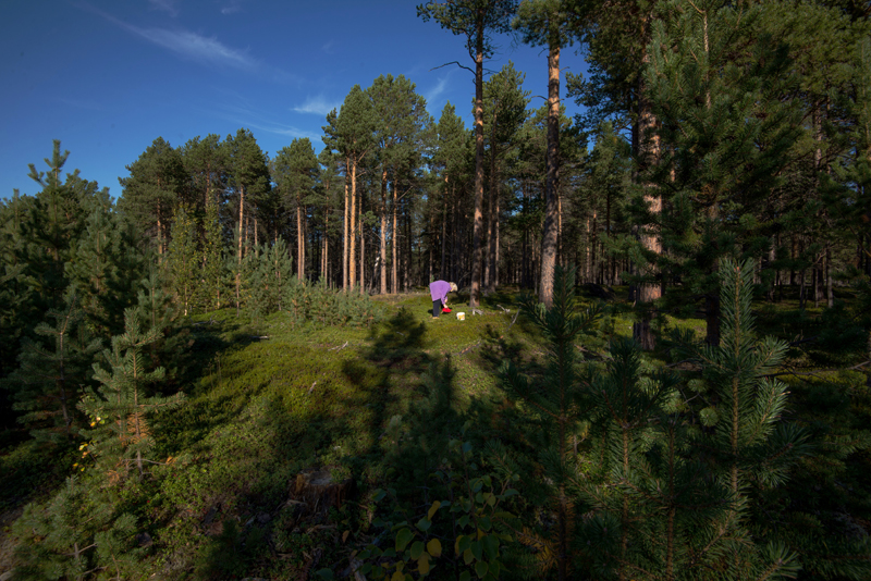 MAry plukker bær i skogen. Foto: Reni Jasinski Wright.
