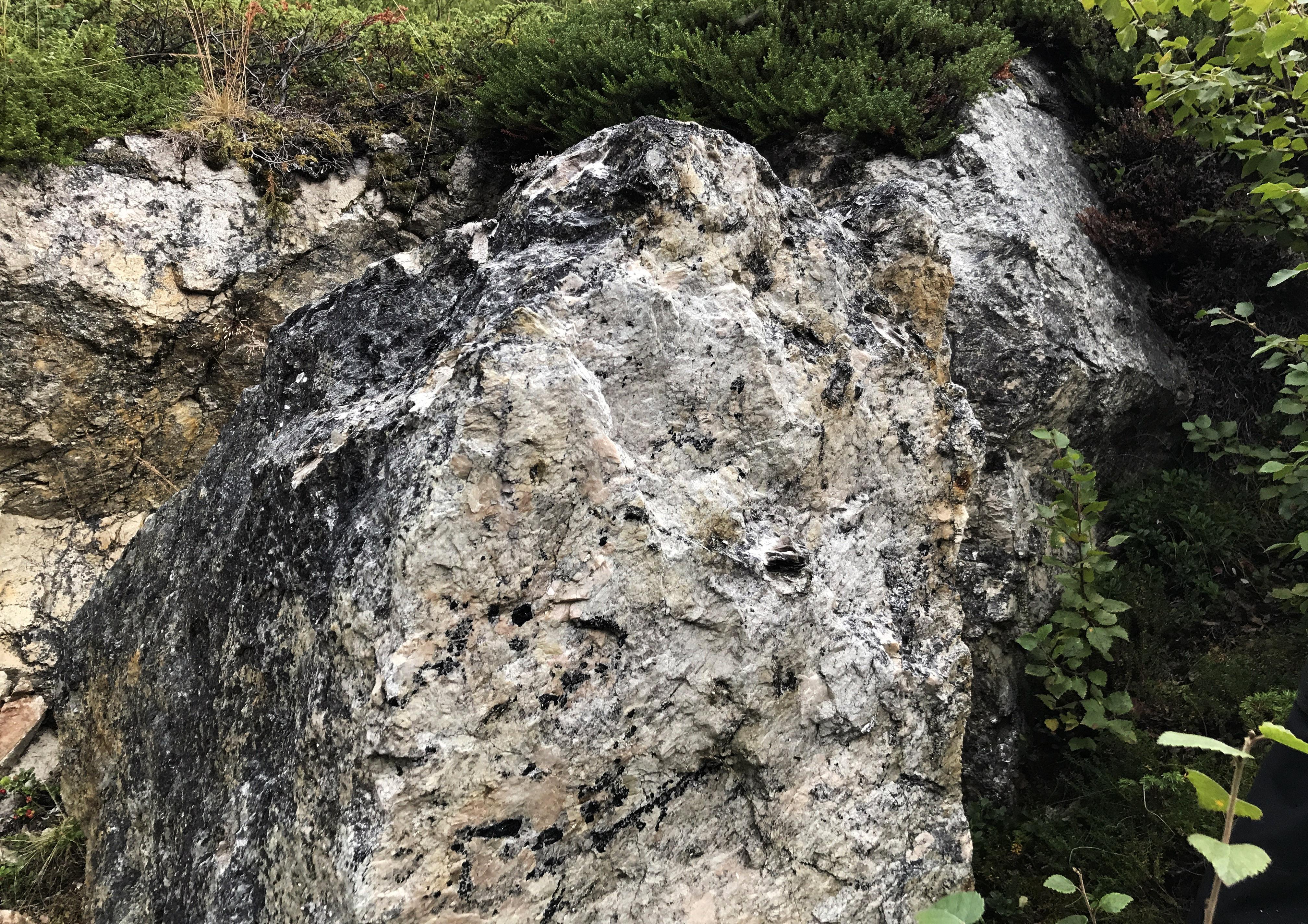 Stein med glimmer, Birtvarr