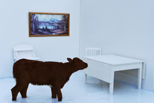 Sort sau i hvitt rom. Hvitt bord og hvitt skap. Naturmaleri på veggen. Foto av Gjert Rognli.