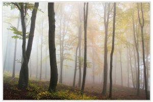 Skog i tåke