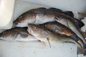 fishing-425342_640