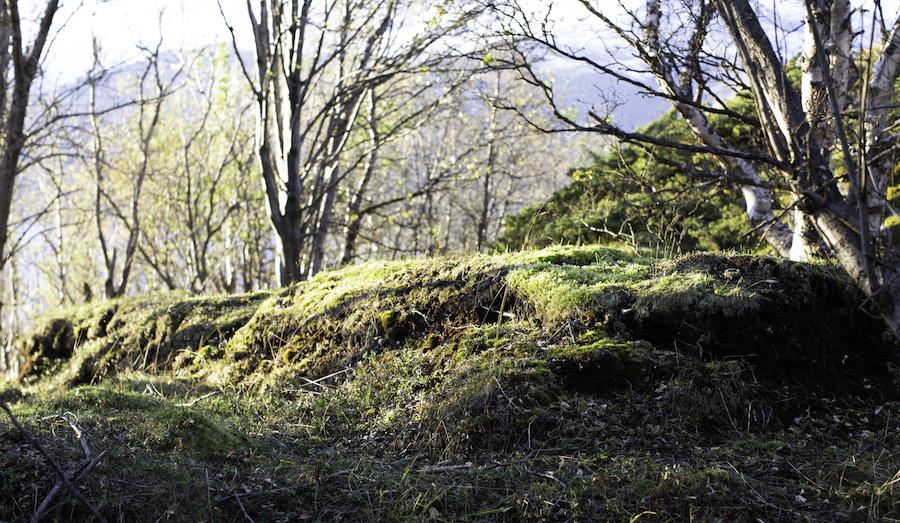 Tufter på Årøya